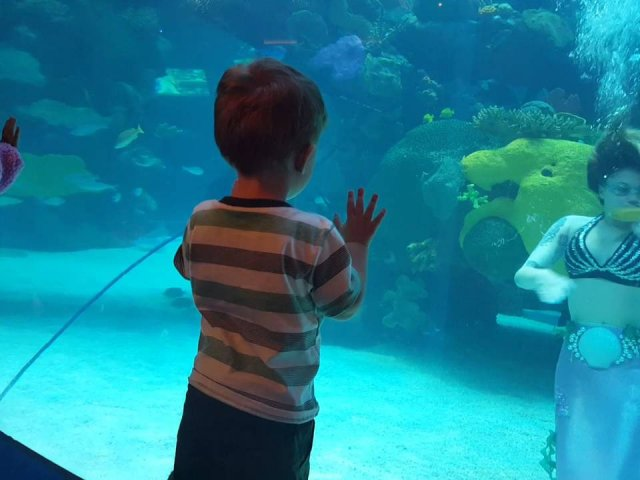 Mermaid Aquarium em Las Vegas